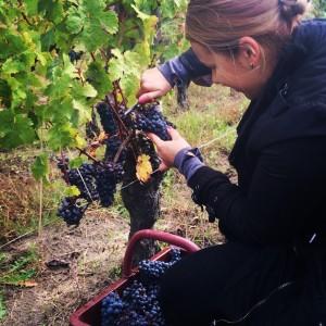 mba-wine-spirits-interview-komissarova-valeriya